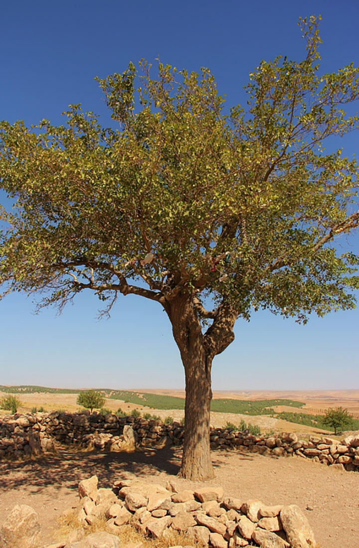 A tree that can be climbed as an activity that can promote memory