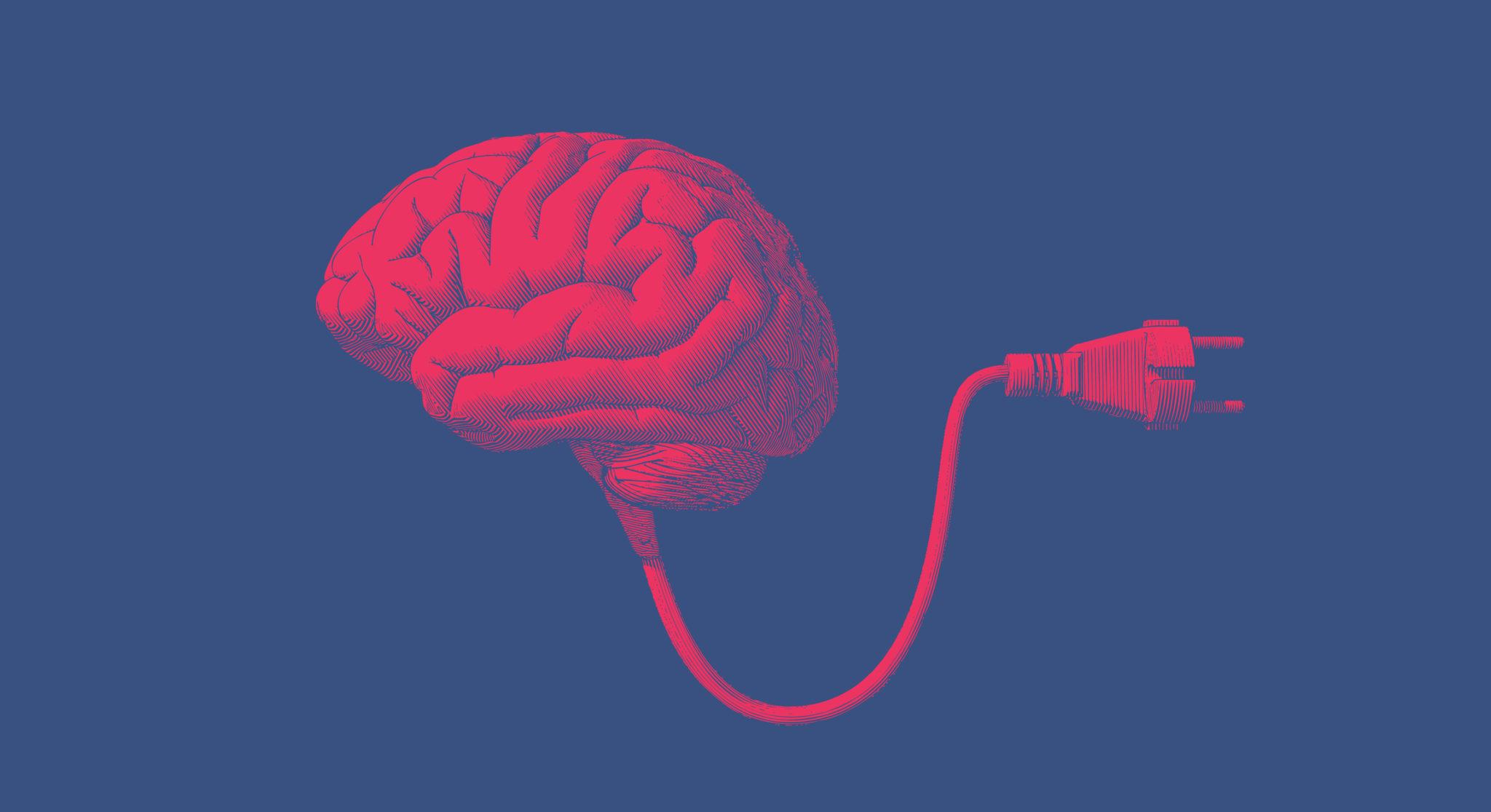 brain with plug grey matter vs white matter